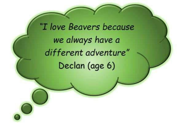 beaver-quote1